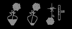verzorgingspagina-snijbloem-extratip