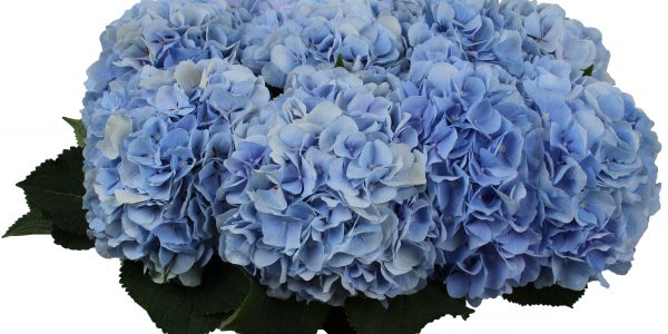 Verena Blue